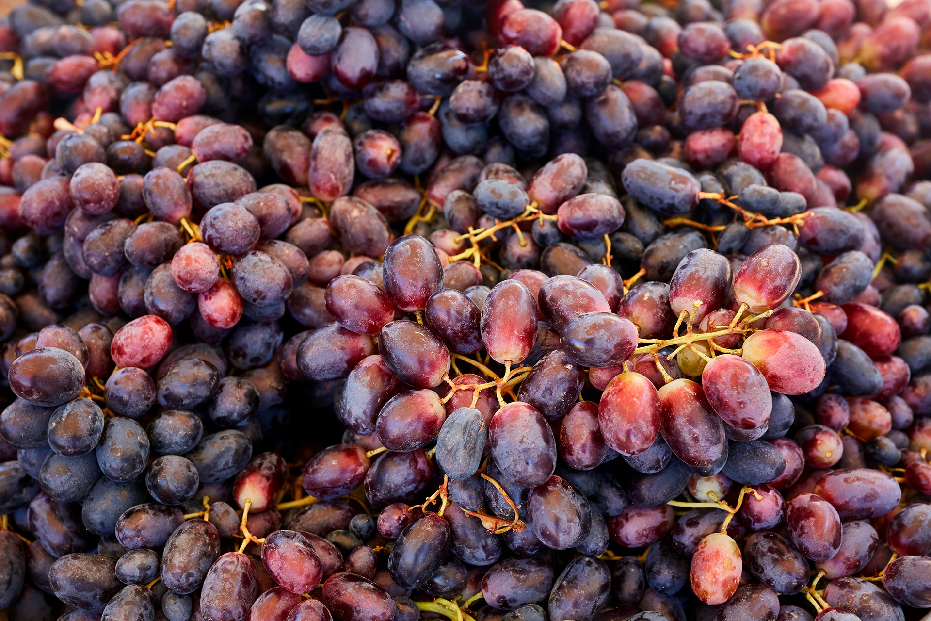 Grapes for Sale